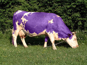 vache-pourpre